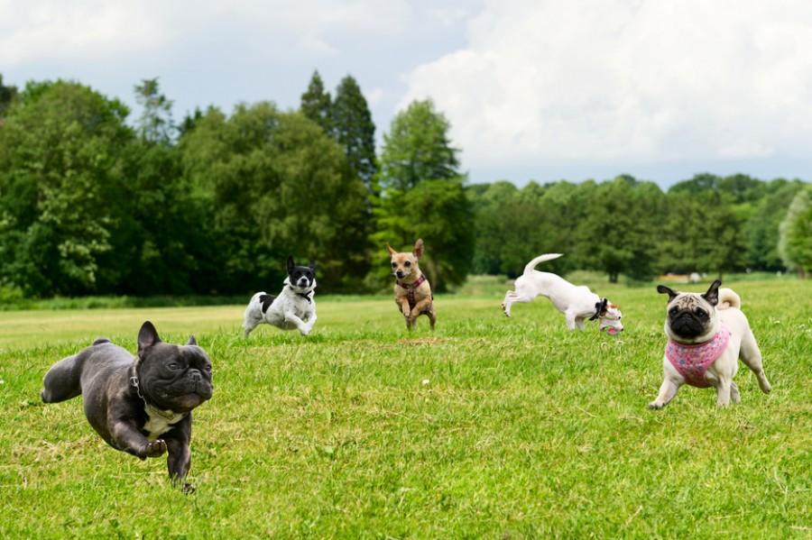 В Стамбульском парке открылась специальная площадка для выгула собак.