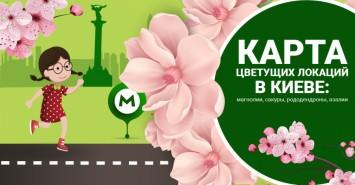 Время для ярких селфи: в Киеве цветут сакуры и магнолии