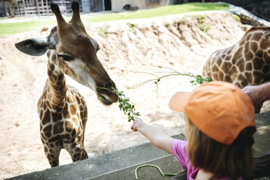Цирки без зверей: как познакомить детей с животными