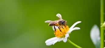 Укусы насекомых: как оказать детям первую помощь