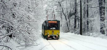 """""""Казковий ліс"""": екскурсія  трамвайчиком + майстер-клас"""