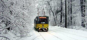 """""""Сказочный лес"""": экскурсия на трамвайчике + мастер-класс"""