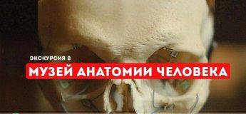 Экскурсия в музей анатомии человека!