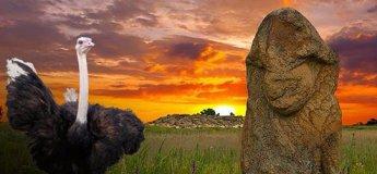 Каменная Могила, страусиная ферма