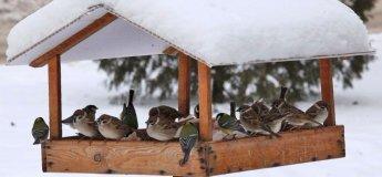 Мастерская для мальчиков «Кормушка для птиц»