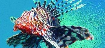 Выставка рыб