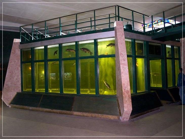 Аквариум пресноводных рыб
